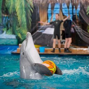 Дельфинарии, океанариумы Верхней Хавы