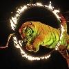 Цирки в Верхней Хаве
