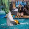 Дельфинарии, океанариумы в Верхней Хаве
